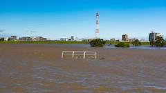 One day all this will be baseball fields, again... (tokyobogue) Tags: tokyo japan typhoon typhoonhagibis hagibis nikon nikond7100 d7100 sigma sigma1750mmexdcoshsm arakawa riverbank river flood flooding 荒川 東京 板橋区