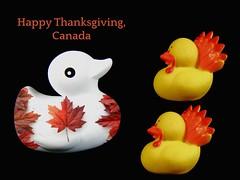 happy thanksgiving weekend, canada 🍁 (muffett68 ☺ heidi ☺) Tags: canada thanksgiving rubberduckies picmonkey overlay 91365 adad aduckaday day84 odc headforthehills