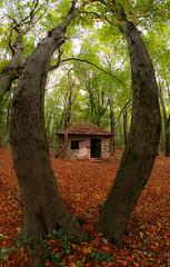 R_DSC_8513 (ViharVonal) Tags: autumn photography samyang 8mm nature naturelovers naturephotography landscape forest hungary balaton