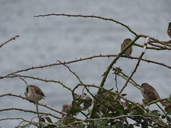 IMG_1116 (jesust793) Tags: pájaros birds naturaleza nature
