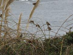IMG_1120 (jesust793) Tags: pájaros birds naturaleza nature