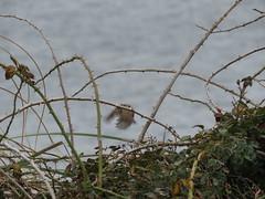 IMG_1136 (jesust793) Tags: pájaros birds naturaleza nature