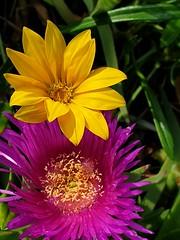 Wild Flowers (ianbless05) Tags: flower macro garden note galaxy