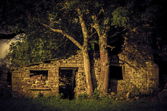 Once upon a time... (tonguedevil) Tags: outdoor outside countryside autumn nature field trees building barn cottage abandoned derelict colour light shadows sunlight