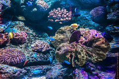 SEA-LIFE-Bangkok-Ocean-World-9289