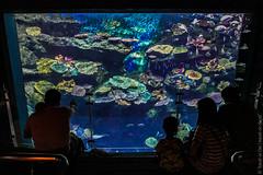 SEA-LIFE-Bangkok-Ocean-World-9303