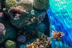 SEA-LIFE-Bangkok-Ocean-World-9306