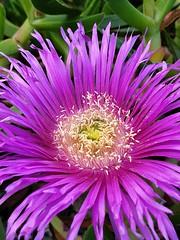 Wild Flowers (ianbless05) Tags: macro flower note galaxy samsung beautiful