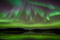 Lake aurora (Petra Schneider photography) Tags: hamarøy norge norway nordnorwegen northernnorway nordland nordlys northernlights nordlicht norwegen nordurljos nordlichter nordlandfylke nikonz6 auroraborealis auroresboréales polarlicht polarlichter