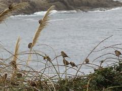 IMG_1118 (jesust793) Tags: pájaros birds naturaleza nature