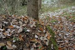Løvfall (KvikneFoto) Tags: nikon1j2 natur høst autumn fall bokeh