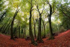 R_DSC_8515 (ViharVonal) Tags: autumn photography samyang 8mm nature naturelovers naturephotography landscape forest hungary balaton