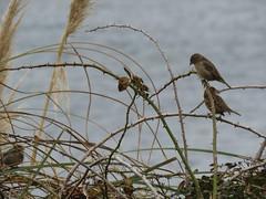 IMG_1121 (jesust793) Tags: pájaros birds naturaleza nature