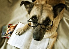 Study (patrick.verstappen) Tags: belgium barbie bélgica d5100 dog daiko animal pet pinterest picassa photo patrickverstappen bible reading glasses watch yahoo young girl gingelom google flickr facebook funny october autumn jesaja xxx expression experiment excercise oxford twitter ipernity ipiccy imagine portrait dogface porträt lovely limburg hund love look looking boy rêve sigma sweet woman you inspiration image jesus history