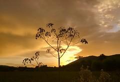 Cuando el sol se esconde (eitb.eus) Tags: eitbcom 16599 g1 tiemponaturaleza tiempon2019 anochecer gipuzkoa hondarribia josemariavega