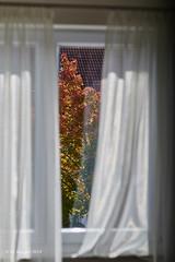 It's autumn outside (markbangert) Tags: autumn tree red gold window nikon z6 fx