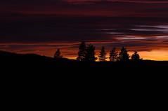Vintage lens photography (steffos1986) Tags: sunset sundown twilight nature landscape sun red yellow green trees forest silhouette black vintage manualfocus pentaxkx rikenonxr50mmf2 norway europe scandinavia autumn fall fineart art