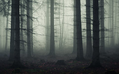 Darkened Living Room (Netsrak) Tags: baum bäume eu eifel europa europe forst landschaft natur nebel rheinland rhineland wald fog forest landscape mist nature trees winter woods