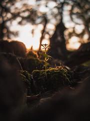 (Patryk Rejdych) Tags: sony polska poland sonyalpha sonyrx100 nature park forest life stilllife bokeh