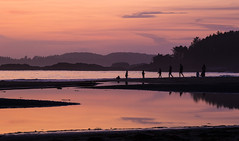 Sunset on Chesterman Beach, Tofino (Peter Starling) Tags: canada peterstarling bc vancouver island sun set dusk sunset sea shore silhouete silhouette cloud orange people family fun reflection seascape landscape shoreline shorescape coast beach north chester man tofino sand trees mountains the point pointe wickaninnish canon 7dii 7dmk2 7dmkii 7d2 24105 pacific