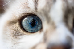 Pô (PaaulDvD) Tags: chat cat animal pet colors eye oeil