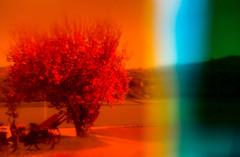 20180420-111 (sulamith.sallmann) Tags: landschaft natur pflanzen analogeffekt analogfilter baum blur boos botanik deutschland effekt effekte europa filter folie folientechnik pflanze rheinlandpfalz unscharf sulamithsallmann bunt