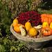 Pumpkins and Flowers by Kids World NBG.JPG