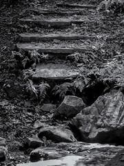 Dene ford (Thomas Cizauskas) Tags: creek stream brook park urbanpark forest urbanforest deepdene drought olmstedlinearpark atlanta georgia canon canonfd legacylens manualfocus fotodiox monochrome blackandwhite