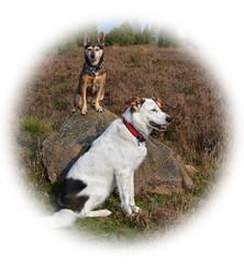 Pet portrait / Haustier-Porträt (r.stopable1) Tags: pet haustier porträt portrait hund dog
