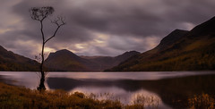 The Lone Tree - Panoramic - Buttermere (neil 36) Tags: thelonetreebuttermere thelakedistrict cumbria endland autumn autumnal longexposure goldcollection top class photography