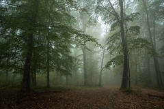 Misty morning (Gyula Toth) Tags: forest woods hungary
