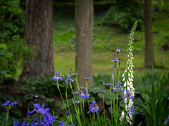 Derbyshire 2019: Flowers and trees (mdiepraam) Tags: derbyshire 2019 melbournehall flowers trees garden
