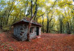 R_DSC_8523 (ViharVonal) Tags: nikon samyang 8mm d750 photography autumn landscape nature naturelovers naturephotography hungary house forest