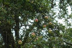 Apples @ Hike to Gorge des Usses