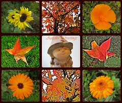 Autumn Greetings (TonyFernando) Tags: autumncolors flower macro garden outdoors nature collage