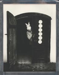 8x10 Winter Bunny 2 (sycamoretrees) Tags: 8x10 analog bw8x10 bw8x10201711 bunny door film impossible instantfilm integralfilm intrepid8x10 intrepidcamera kodakcommercialektar305mm largeformat marianrainerharbach mask polaroid polaroidoriginals winter