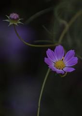(ikeda f.) Tags: nature flower macro japan