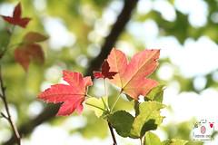 木風 (~金玉~ Y.C.CHEN) Tags: canon color colorful beautiful bokeh marco tree plant red green