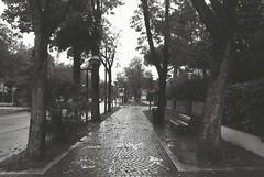 Rimini (goodfella2459) Tags: nikonf4 afnikkor24mmf28dlens adoxsilvermax100 35mm blackandwhite film analog rimini italy streets trees bwfp