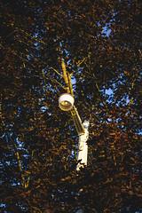 Solo (Adrian Schaap) Tags: canada valley ns novascotia nova scotia annapolis cove autumn fall seasons leaves art creative weekend getaway outside canon 5d tones colours edit filter photoshop 5dmk2 lseries