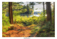 Bench with a view (Pearce Levrais Photography) Tags: landscape outside outdoor sunlight sunshine sunny sun sundown sunset sunrise forest tree plant sky cloud water lake pond sony a7r3 hdr stone granite bench isolated isolation beauty beautiful