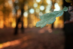 The last green one (Pásztor András) Tags: d5100 dslr nikon andras pasztor photography forest leaf autumn tree earth oxigen bokeh dof yongnuo 35mm f2