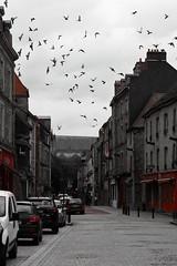 Multitude ! (Tonton Gilles) Tags: alençon normandie grande rue noir et blanc partiel oiseaux pigeons colombes tourterelles nuée doiseaux voitures rouge scène de paysage urbain