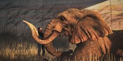 where you got that hairsbase from, darling? (Mara Telling:) Tags: sl secondlife grauland elephant photography lol virtualphotography hairbase