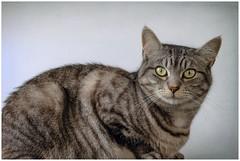 Baby-Kat (tina777) Tags: babykat cat feline animal pet