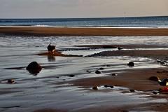 Scruff I (JessicaAKA.) Tags: beach running sea northsea dog dogs terrier ocean silhouette outline sand scottish scotland animal