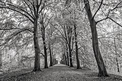 Sunday Walk (Frank van Dam Utrecht) Tags: bilthoven bos hss