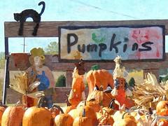 Happy Sliders Sunday (novice09) Tags: slidersunday hss fotosketcher ipiccy pumpkins painterly digitalartpainting autumn