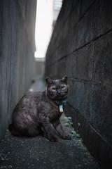 猫 (fumi*23) Tags: ilce7rm3 sony sel35f18f emount 35mm a7r3 animal alley katze neko cat chat bokeh ねこ 猫 ソニー