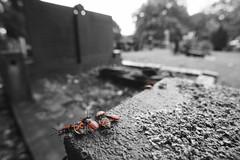 Graveyard shift (mark his view) Tags: sony a7r2 a7rii macro laowa camera app
